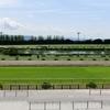 【京都新聞杯 2020予想】追い切り・ラップ適性・レース傾向考察 & 各馬評価まとめ / ダービーへの登竜門だけに...瞬発力勝負回避なら