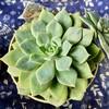 🌵多肉植物  秋の植え替え作業㉒🌵