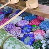 美しすぎる手水舎「御裳神社」紫陽花祭りは駐車場が無い!!?