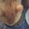 ノラ猫のダイちゃんは右利きでした
