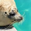 紋別観光【オホーツクとっかりセンター】アザラシと触れ合える日本で唯一の海獣保護施設