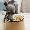 犬の手作りごはん|ごほうびは秋サンマのカリカリチーズ焼き。