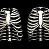 胸郭のリリースの世界
