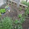 週末は家庭菜園(^_-)-☆