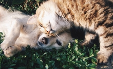 インターネットのイヌ・ネコ「面白ネタ」を英語で楽しむ