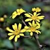 季節の花(霜月)その壱