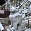 新熊野神社の雪、白く染まる大樟。