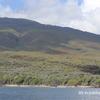 ハワイでホエールウォッチング イルカとクジラとクラフトビール