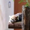 【動物園】 茶臼山動物園|長野市