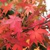 マンゴー殿、秋の装い