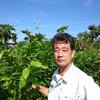 【蚕のご飯だけじゃない、健康食品としても注目の桑の葉が元気に育っています】