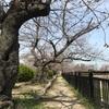 大阪は晴れて気持ちがいいけれど…。