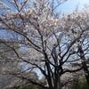 お花見日和〜25日日曜日