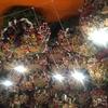 今年も浅草 鷲神社の酉の市に行ってきた 午前9時までに並ぶと空いているかも