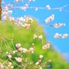 行く春・来る春