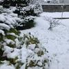 雪のシーズン幕開けと共にわが家に出現するモノ!?