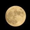 「中秋の名月(十五夜お月さん)」の悲話