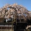平成の枝垂れ桜花見「慶恩寺」