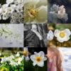 アメブロ、Instagram、Facebookに作家「月下美人」さんの詩を紹介しました。