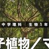 《授業動画》中学理科|生物 1 年|04|裸子植物/マツ