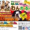 Dog Halloween Fes & わん・わん・わんだふるフェスタ2020