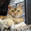 9月前半の #ねこ #cat #猫 どらやきちゃんB