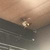 磐田市でウッドデッキの下の蜂の巣を駆除してきました