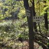 スモモの木と茶屋跡