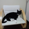 本日猫ブログです☆ふぁっきゅー編