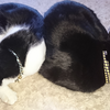 今日の黒猫モモ&白黒猫ナナの動画ー855