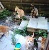 【野良猫・保護猫】猫たちとの出逢い方〜ナッツ編〜