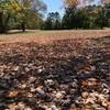 秋も深まり落ち葉を楽しもうとホームコースのホプキンスビル・カントリークラブでのんびりプレー。