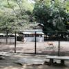 小島一郎展 三島の鰻 沼津のブックカフェ