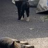 10月16日 小台から荒川沿岸の 猫さまたち