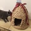 マリモさん、猫つぐらとの遭遇