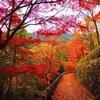 「紅葉ツーリングに行こう♪」_奈良・吉野山
