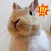 【ミニウサギのサスケ先輩】コロナ自粛で疲れた時こそうさぎのかわいいしぐさで癒されてみませんか??