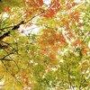 秋の伊豆旅行!小さな子供のいる家族向け【2日目】
