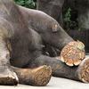 仏の32相に見る「象の特徴」と『無上のナーガ』:瞑想実践の科学10