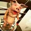 豚ちゃん。