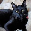 黒猫プリン🍮