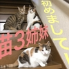 我が家のにゃんこ3姉妹を紹介!3匹とも元ノラ猫です。