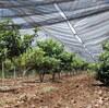 新規就農せず農業法人・季節労働で働く選択肢もある