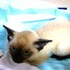 子猫のヨーダ君【2】