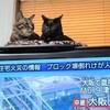 地震の報告