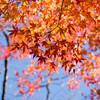 見頃までもう少し いわき龍神峡で紅葉を見てきました