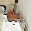 とりあえずレオパを1週間飼ってみたレポート@うんこレポート写真もあるで!