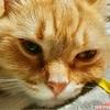 写真集を出したい猫~ミリオンセラー~