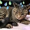 486 ウチの猫 9