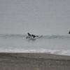 24日の日曜、スネ以下の茅ヶ崎でフィンレスサーフィン
